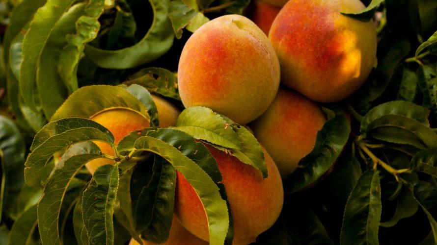 ピーチピンクフルーツフラペのおすすめアレンジは?カロリーや販売期間も調査!